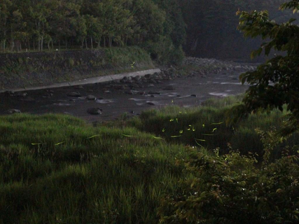 狩野川と源氏蛍