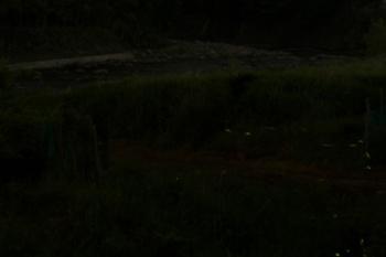 ゲンジボタルと狩野川